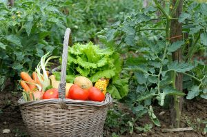fines herbes et légumes