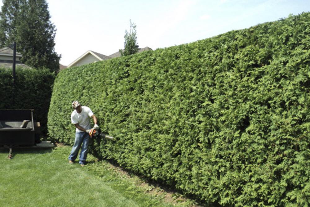 tailler arbustes